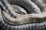 Reptile008.jpg