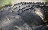 Reptile010.jpg