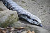 Reptile015.jpg