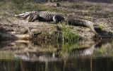 Reptile028.jpg