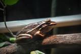 Reptile044.jpg