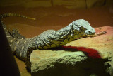 Reptile049.jpg