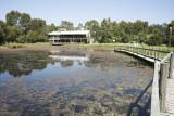 08_03_13 Wetlands Centre & Kooragang