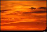 orange folds of delight