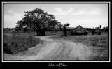 African Bliss
