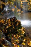 Fallen Leaves, Grotto Falls
