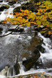 Fall Color, Upper Tremont