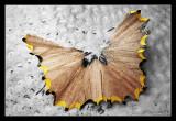 063 - AccidentalButterfly