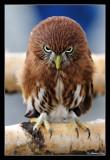 066 - SmallBird - BigAttitude