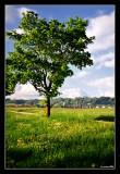 068 - Tussenhausen