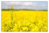 070 - Yellow