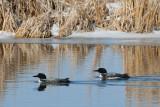 City of Edmonton Wetland Strategy