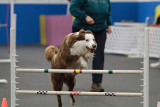 All Dogs Gym Jan 18th 2010