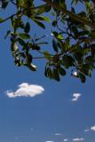 20100119_4905 Summer's Day (Tue 19 Jan)