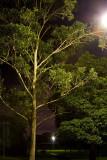 20100313_6305 Park, Before Dawn (Sat 13 Mar)