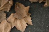 20100406_5250 Autumn Cometh (Tue 06 Apr)