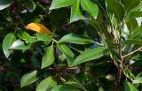 20100411_7269 The Yellow Leaf (Sun 11 Apr)
