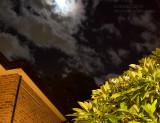 20100425_7781 The Night Sky And The Frangipani Tree (Sun 25 Apr)