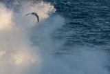 8075 Surfing The Air