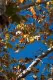 20100510_5457 Autumn Foliage Take 27 (Mon 10 May)