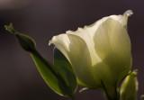 bloem met tegenlicht