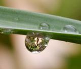 regen druppel