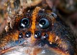 100% Crop of Spider