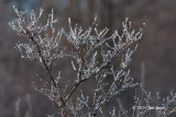 More Frosty Branches!