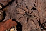 Spiders & Kin