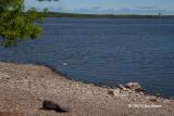 Shoreline near Mud Lake