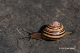 There's a Snail on the Trail!