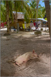 Let Sleeping Pigs Lie