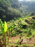 Iskandar Hiking in the Sawah