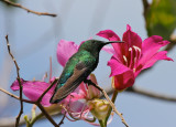 Birds of Virgin Gorda, BVI