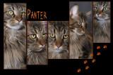 2008_Panter collage2-02.JPG
