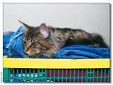 Panter the laundrycat
