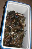 4 dozen crabs