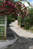 Colores de la Bugambilias en las Calles
