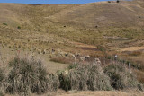 Vista de la Campiña de la Aldea La Capellania (3,100 MSNM)