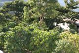Plantas de Cafe en las Cercanias del Area Urbana