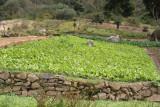 Plantaciones de Verduras en la Ruta a la Cabecera