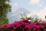 Flor de Bugambilia y Volcan San Pedro