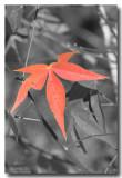 Fall_7813ds.jpg