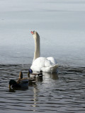 Suivez toujours mon panache blanc... Everybody follows me...
