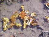Flaque aux feuilles mortes