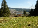 In spring, all the meadows around Gérardmer are covered with thousands of yellow daffodils