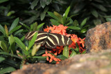 :: A TRIP TO THE BUTTERFLY CONSERVATORY ::