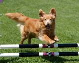 Dogz First Agility Trial