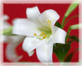 Lensbaby Lily