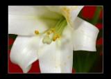 K10D2081_frame2.jpg